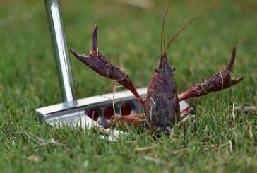 Le regole del golf e gli ostacoli di fauna e flora