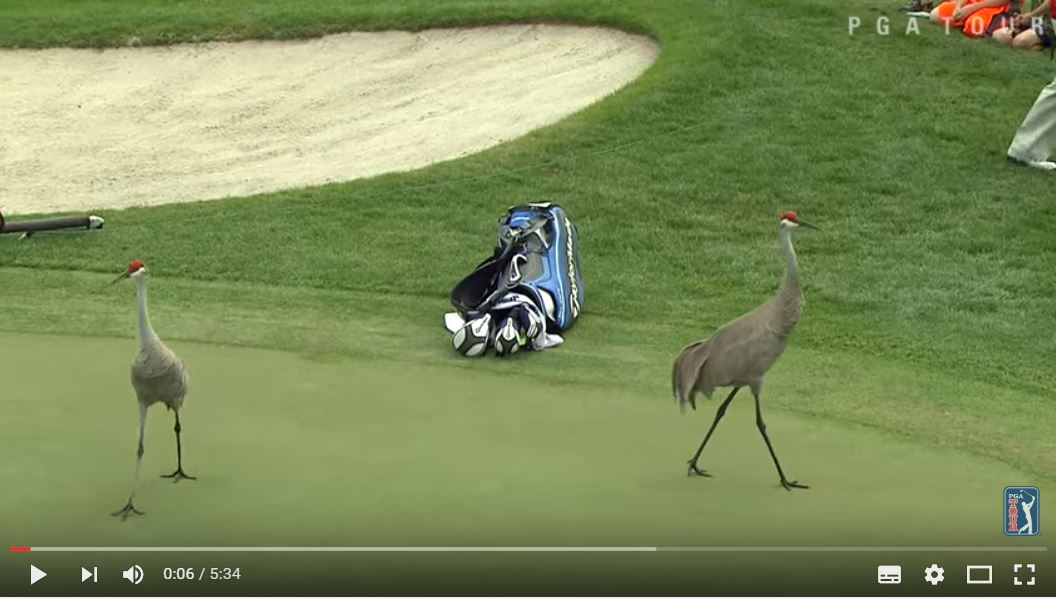 """La Top 10 degli incontri """"inaspettati"""" sul campo del PGA Tour [Video]"""